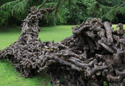 Carte Postale Du Domaine De Chaumont Sur Loire Sculpture Nature